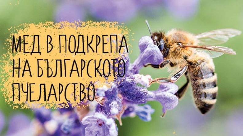 пчела и колаж за корица на статията Мед в подкрепа на българското пчеларство