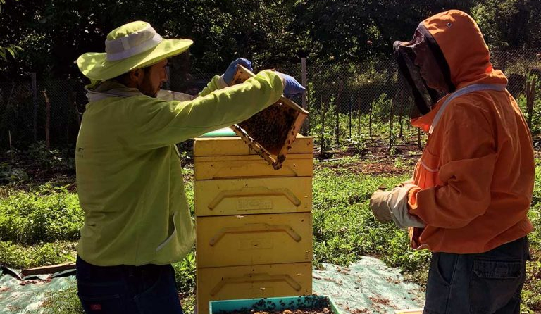 двама пчелари менажират кошер