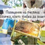 Всичко, което трябва да знаете за посещението на пчелин