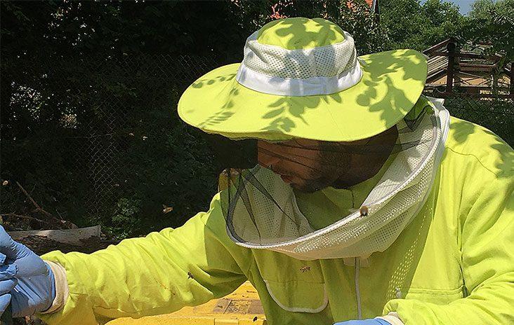 Сергей Петров като пчелар менажира кошер от своя пчелин