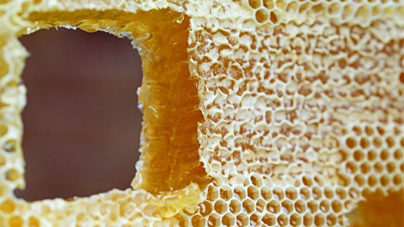 пчелна пита с мед близък план