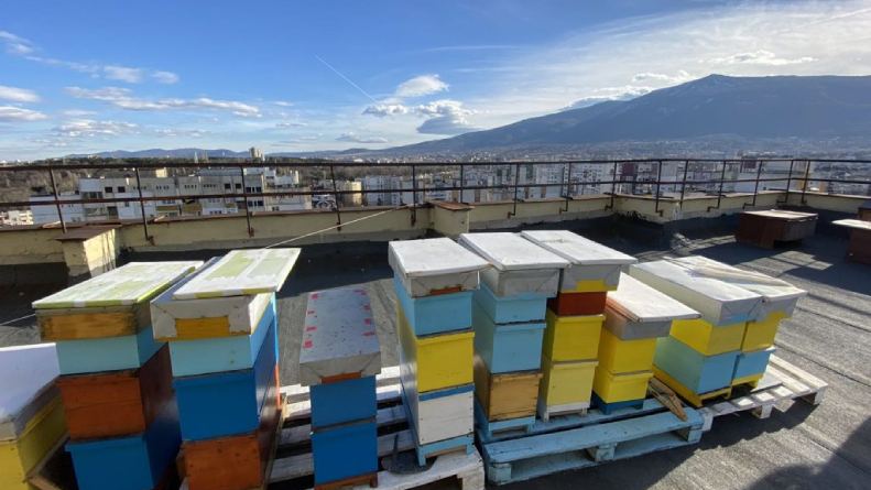 пчелин на покрива на блок в град София